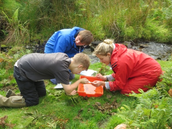 Biologists explore Exmoor, sand dunes and shores